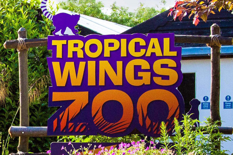 tropicalwingszoo